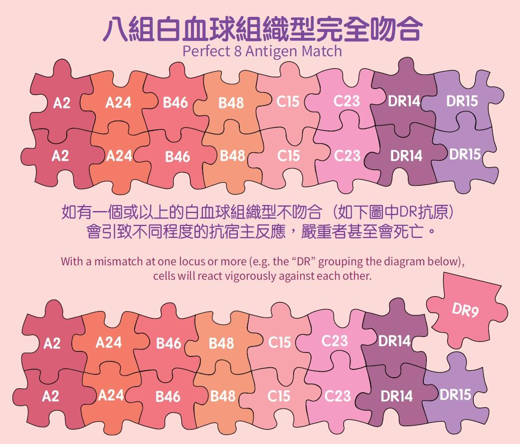 Image:  HLA antigens